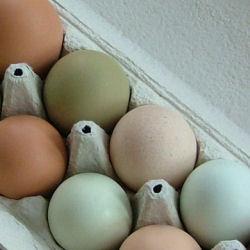 Eri värisiä kananmunia kartonkikotelossa.